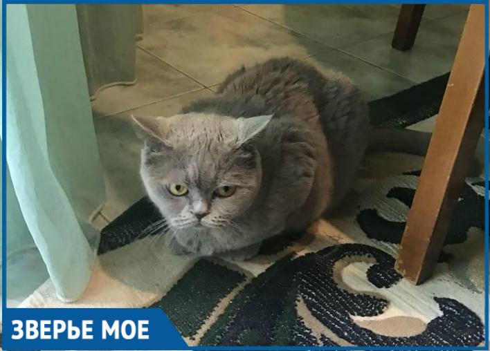 После девяти лет жизни в семье кошка Ирис осталась на улице