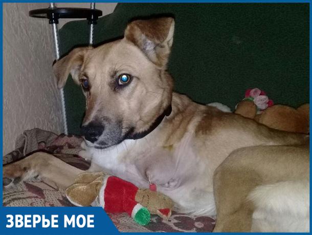 Волонтеры организации «Делай добро» ищут дом бегающему на трех лапах псу Цезарю