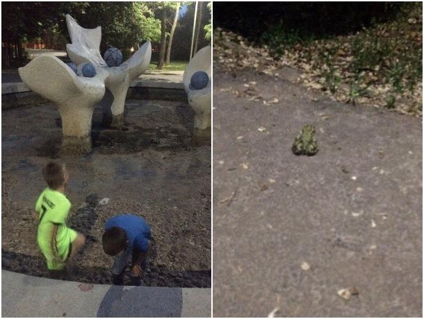 Доблестные школьники в Волгодонске спасли погибающих в высыхающем фонтане лягушек