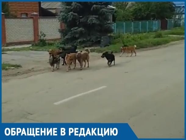 Стая бездомных собак из девяти особей пугает жителей переулка Вокзального