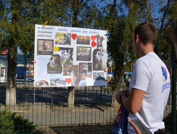 В Волгодонске состоится благотворительная акция в помощь животным