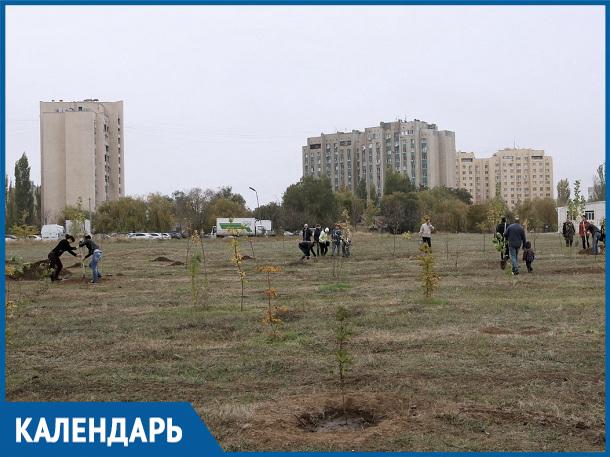 В эти дни 35 лет назад в парке «Молодежном» были высажены первые деревья