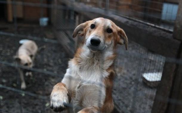 В парке Победы 23 июня пройдет  выставка «Собаки ищут дом»