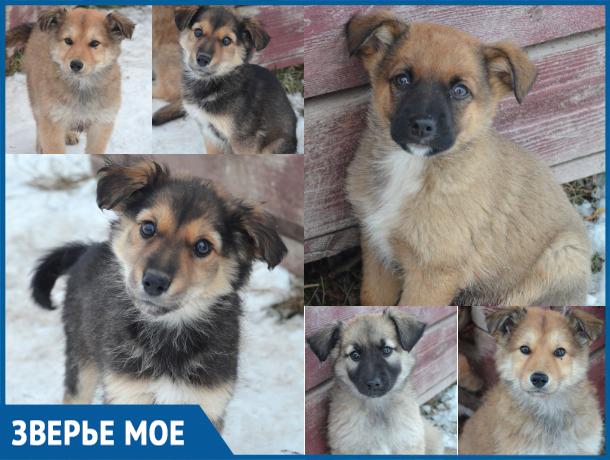 Волонтеры Волгодонска спасли от усыпления шесть слепых щенков и их маму