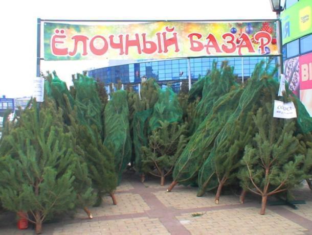Цена новогодних деревьев на елочных базарах Волгодонска будет доходить до 4000 рублей