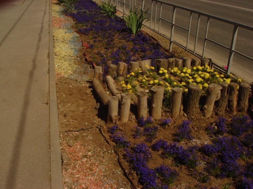 Небольшие цветочные газоны возле сквера «Дружба» привлекли внимание волгодонца