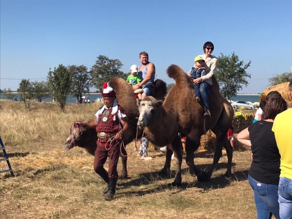 С прогулки на верблюдах и дегустации вина начался фестиваль «Шелковый путь»