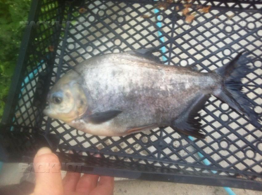 рыбалка на заливе волгодонск